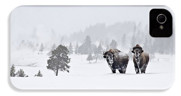 Bison In The Snow IPhone 4s Case by Gary Lengyel