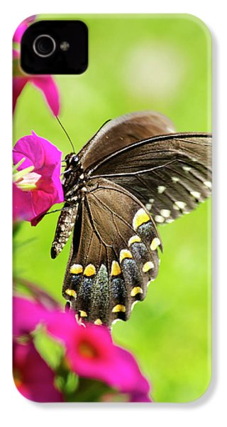 IPhone 4s Case featuring the photograph Black Swallowtail Butterfly by Christina Rollo