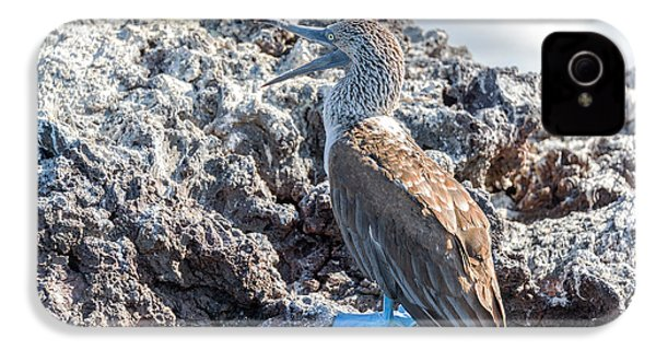 Blue Footed Booby IPhone 4s Case by Jess Kraft