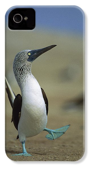 Blue-footed Booby Sula Nebouxii IPhone 4s Case by Tui De Roy