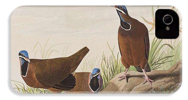 Blue Headed Pigeon IPhone 4s Case by John James Audubon