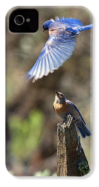 Bluebird Buzz IPhone 4s Case by Mike Dawson