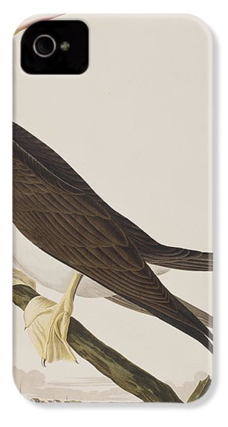 Booby Gannet   IPhone 4s Case by John James Audubon