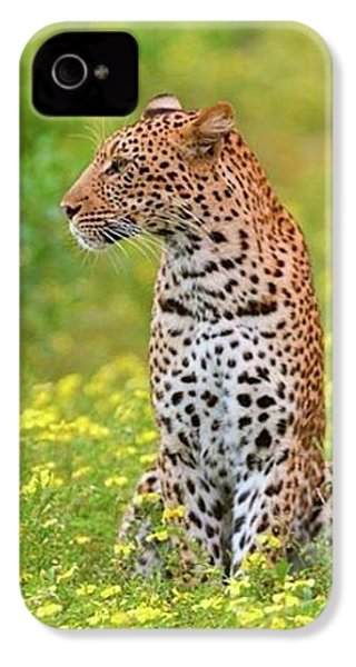 Botswana Leopard  IPhone 4s Case by Happy Home Artistry