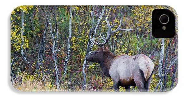 IPhone 4s Case featuring the photograph Bull Elk by Aaron Spong