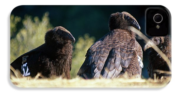 California Condors IPhone 4s Case by Soli Deo Gloria Wilderness And Wildlife Photography