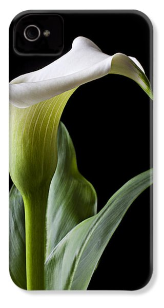 Calla Lily With Drip IPhone 4s Case by Garry Gay