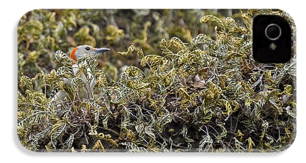 Camouflaged Red-bellied Woodpecker IPhone 4s Case by Carolyn Marshall