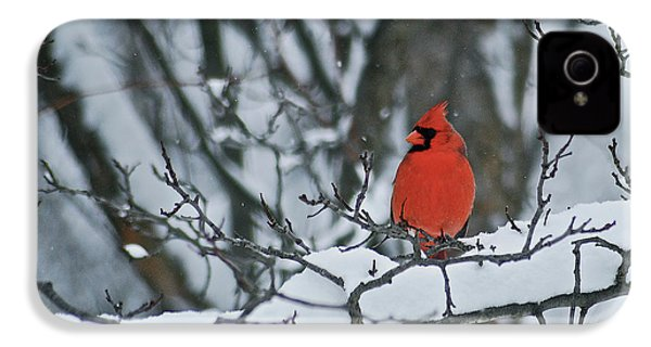 Cardinal And Snow IPhone 4s Case by Michael Peychich