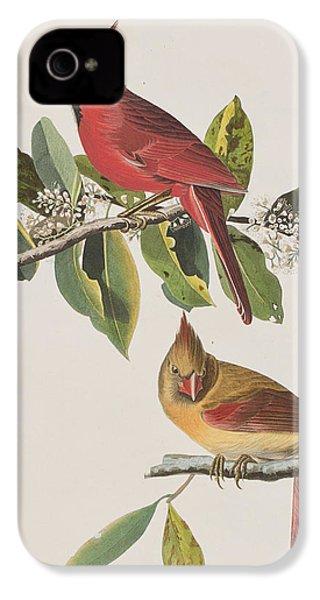 Cardinal Grosbeak IPhone 4s Case