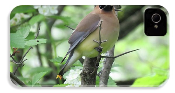 Cedar Wax Wing IPhone 4s Case by Alison Gimpel