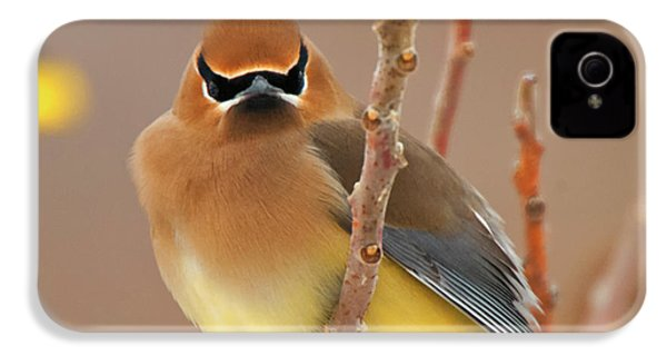 Cedar Wax Wing IPhone 4s Case by Carl Shaw