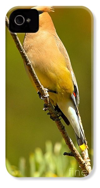 Cedar Waxwing IPhone 4s Case by Adam Jewell