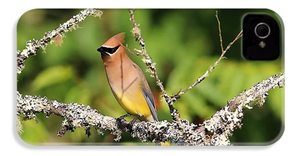 Cedar Waxwing  IPhone 4s Case by Carol R Montoya