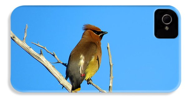 Cedar Waxwing IPhone 4s Case by Dianne Cowen