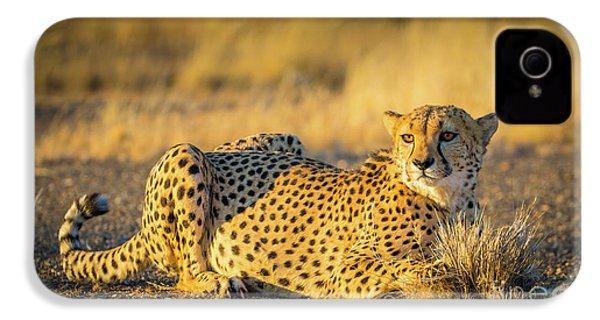 Cheetah Portrait IPhone 4s Case by Inge Johnsson