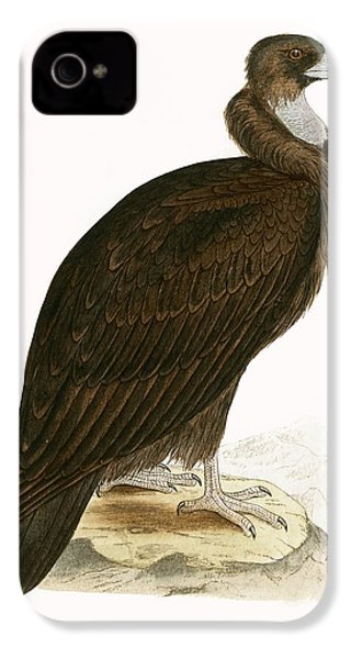 Cinereous Vulture IPhone 4s Case by English School