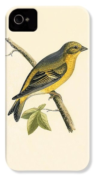 Citril Finch IPhone 4s Case by English School