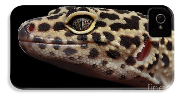 Close-up Leopard Gecko Eublepharis Macularius Isolated On Black Background IPhone 4s Case by Sergey Taran