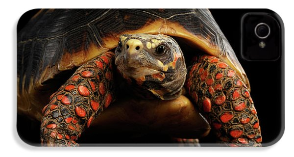 Close-up Of Red-footed Tortoises, Chelonoidis Carbonaria, Isolated Black Background IPhone 4s Case by Sergey Taran