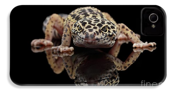 Closeup Leopard Gecko Eublepharis Macularius Isolated On Black Background, Front View IPhone 4s Case by Sergey Taran