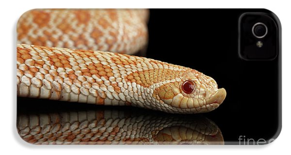 Closeup Pink Pastel Albino Western Hognose Snake, Heterodon Nasicus Isolated On Black Background IPhone 4s Case by Sergey Taran