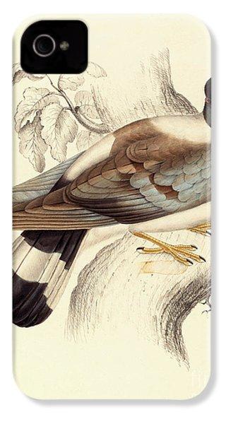 Columba Leuconota, Snow Pigeon IPhone 4s Case by Elizabeth Gould