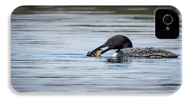 Common Loon IPhone 4s Case by Bill Wakeley