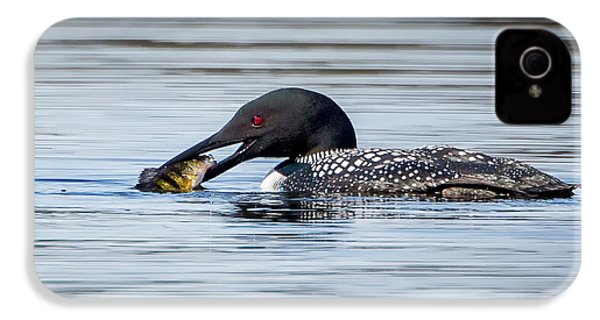 Common Loon Square IPhone 4s Case by Bill Wakeley