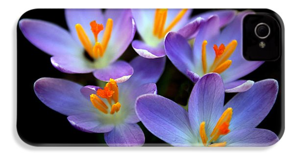IPhone 4s Case featuring the photograph Crocus Aglow by Jessica Jenney
