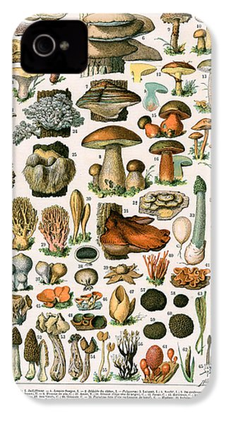 Decorative Print Of Champignons By Demoulin IPhone 4s Case