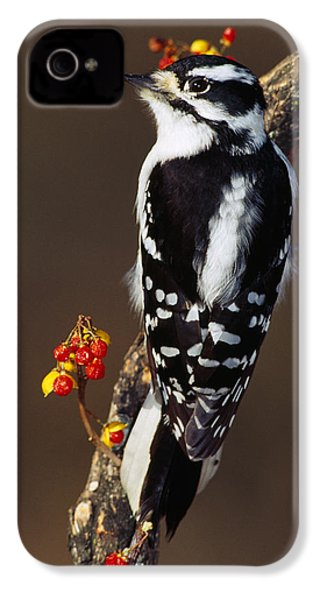 Downy Woodpecker On Tree Branch IPhone 4s Case by Panoramic Images