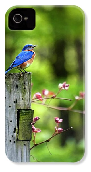 Eastern Bluebird IPhone 4s Case by Christina Rollo