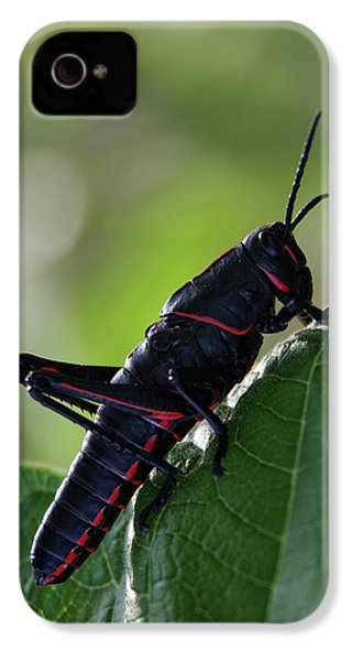 Eastern Lubber Grasshopper IPhone 4s Case by Richard Rizzo