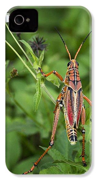Eastern Lubber Grasshopper  IPhone 4s Case by Saija  Lehtonen
