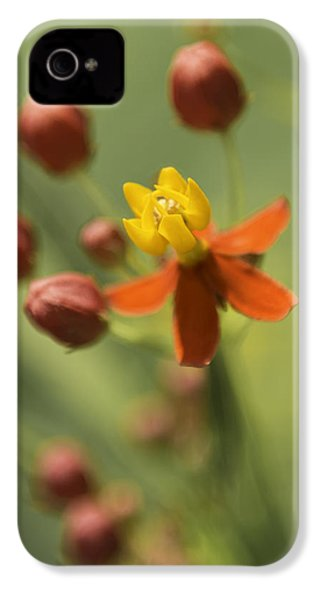 Emergence - Asclepias Curassavica - Butterfly Milkweed - South Carolina Botanical Gardens IPhone 4s Case by Johan Hakansson