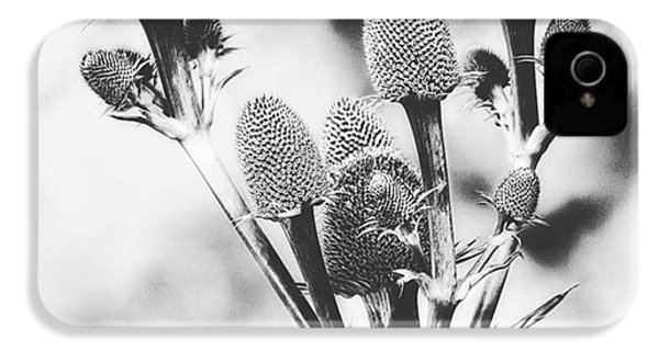 Eryngium #flower #flowers IPhone 4s Case