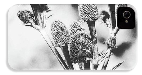 Eryngium #flower #flowers IPhone 4s Case by John Edwards