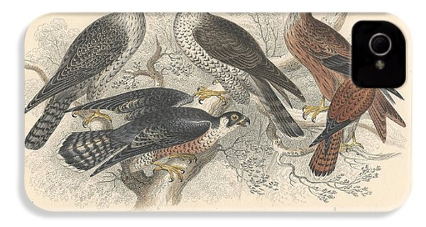 Falcons IPhone 4s Case by Dreyer Wildlife Print Collections