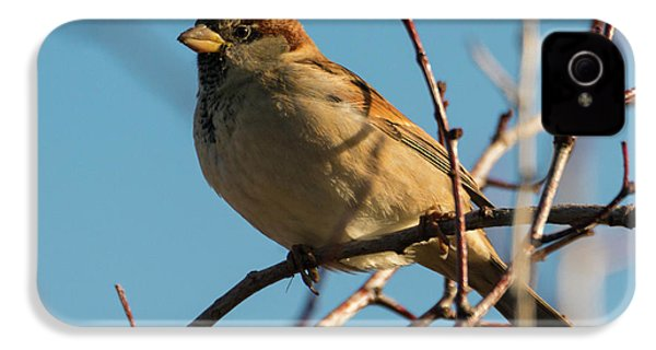 Female House Sparrow IPhone 4s Case by Mike Dawson
