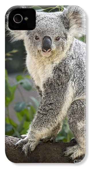 Female Koala IPhone 4s Case by Jamie Pham