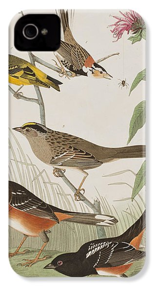 Finches IPhone 4s Case