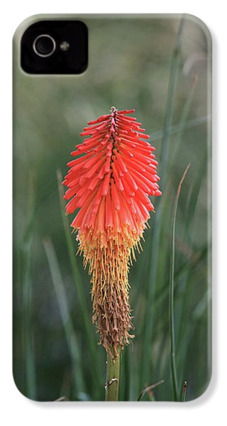 IPhone 4s Case featuring the photograph Firecracker by David Chandler