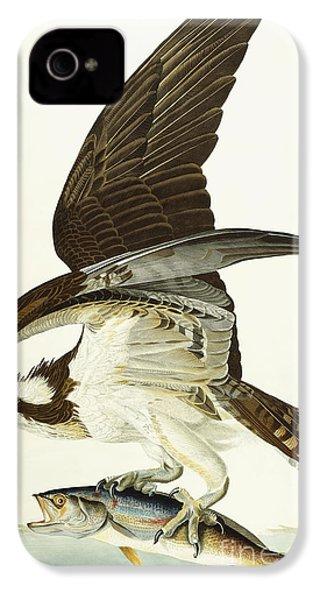Fish Hawk IPhone 4s Case by John James Audubon