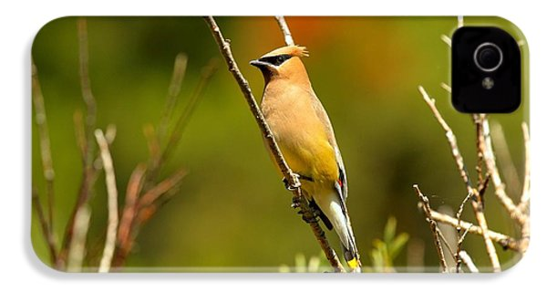Fishercap Cedar Waxwing IPhone 4s Case by Adam Jewell