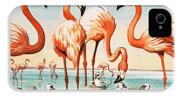 Flamingoes IPhone 4s Case by English School