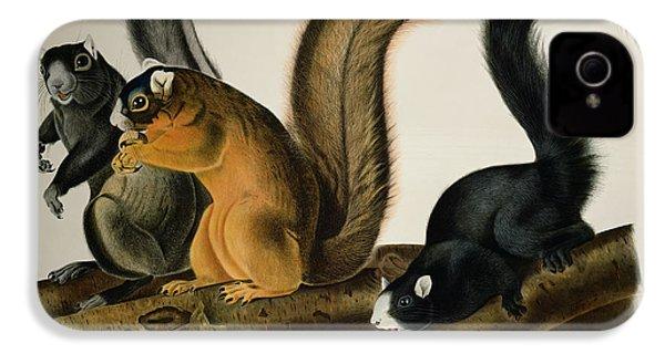 Fox Squirrel IPhone 4s Case