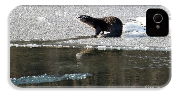 Frosty River Otter  IPhone 4s Case by Mike Dawson
