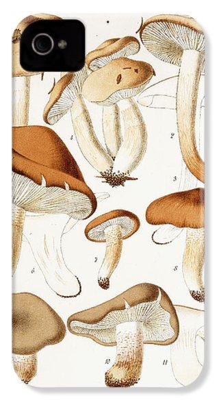 Fungi IPhone 4s Case by Jean-Baptiste Barla