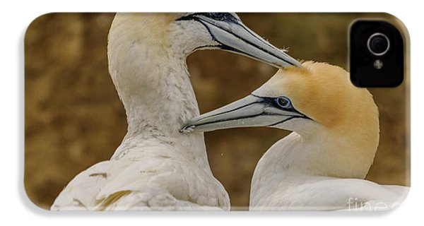 Gannets 4 IPhone 4s Case by Werner Padarin